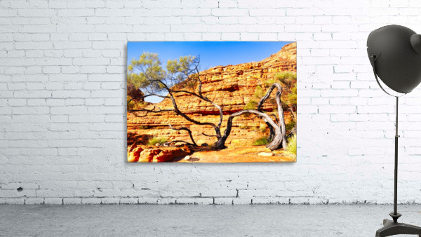 Twisted Tree - Kings Canyon
