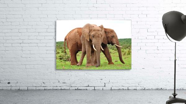 Addo Elephants 45