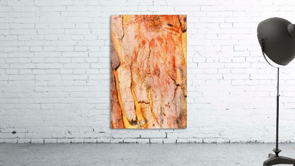 Eucalyptus Bark And Patterns