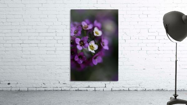 Flower Ball Allysium Flowers