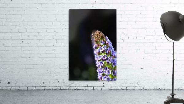 Veronica Flower Delight