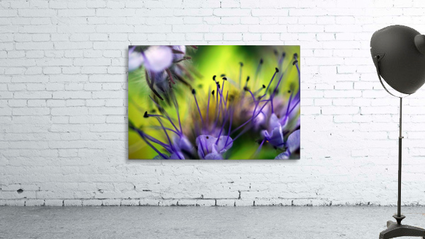 Abstract Pop Color Flower Photography 17