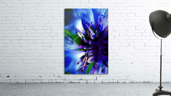 Abstract Pop Color Flower Photography 21