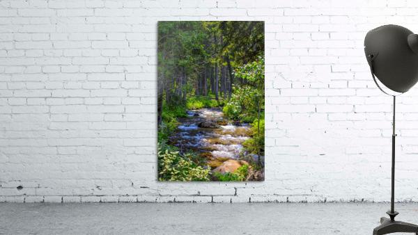 Fairy Creek