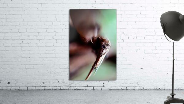 Abstract Macro Nature Photography 146