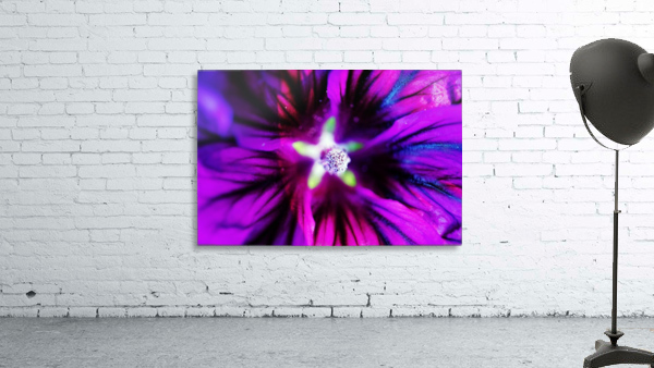 Abstract Pop Color Flower Photography 38