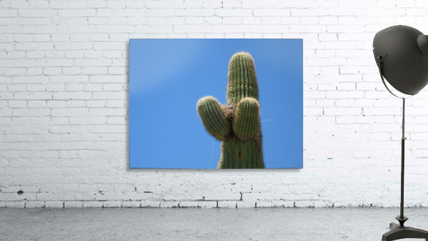 Saguaro Cactus Cradling A Birds Nest Photography