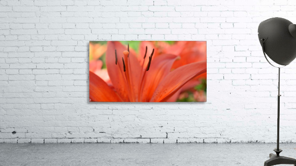 Beautiful In Orange Photography