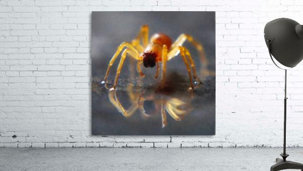 Spider reflecting