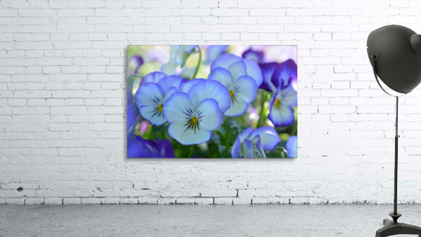 Blue Flower Garden Photograph