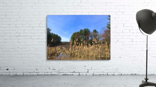Simsbury Wetland