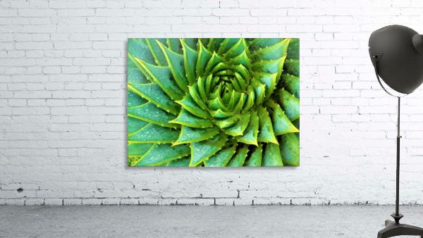 Cactus Spiral