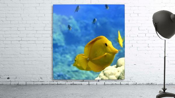 Yellow  a yellow tang
