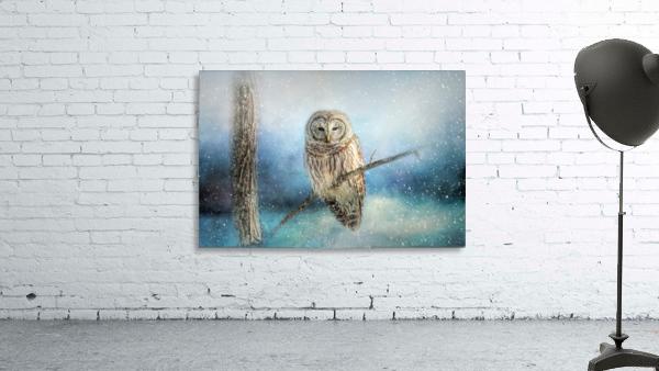 Barred Owl Solitude