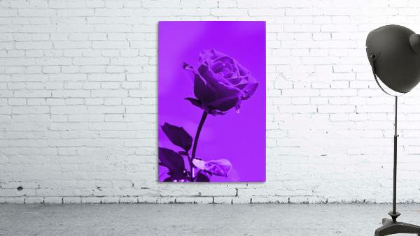 Love Rose purple 8665