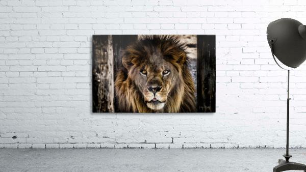 A Regal Lion