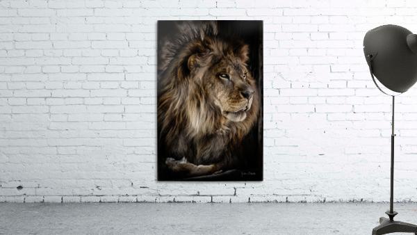 A Lions Profile