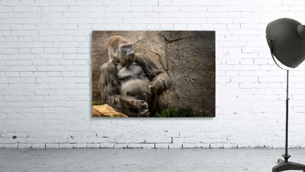 Big Daddy Silverback Gorilla