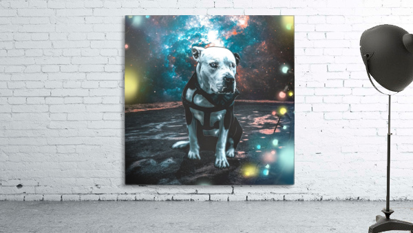 cosmos background space dog