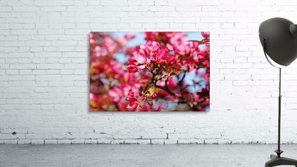 Crabapple Pink