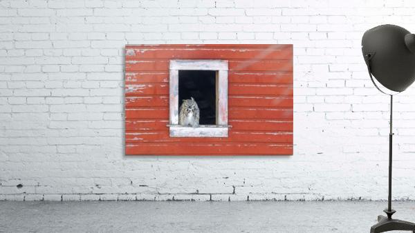 Great Horned Owl - Red Barn