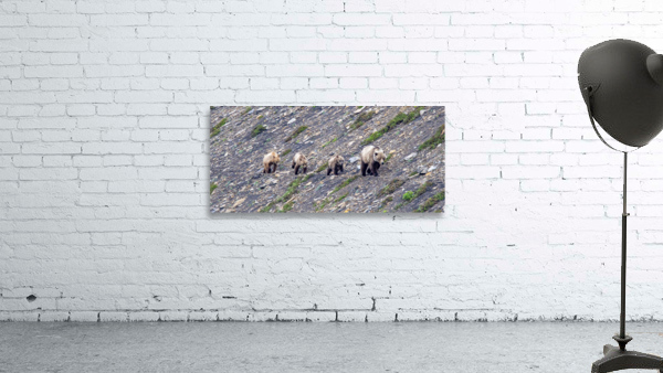 Grizzly Bear Family - Walk this way.