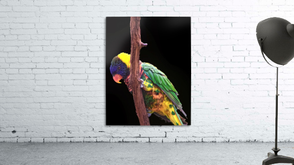 Colorful Bird on branch