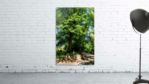 Tree Than Owns Itself   Athens GA 06567