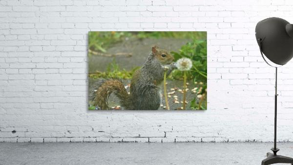 Squirrel paw warming