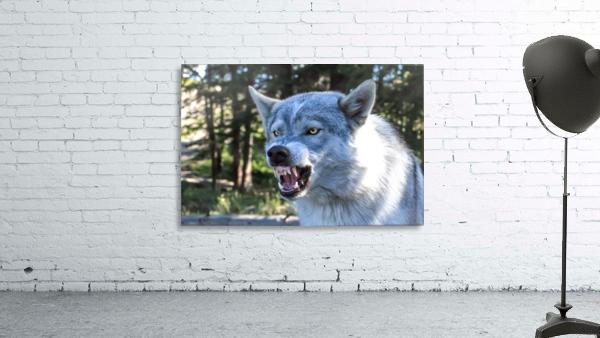 Wolf Dog Snarling