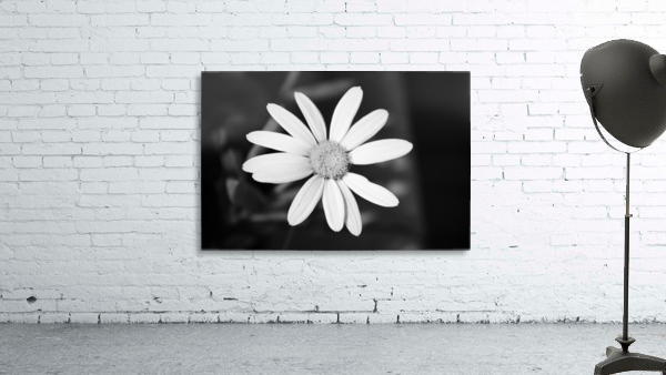 Beautifully White B&W