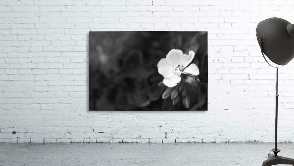 Blooming side flower B&W