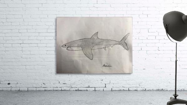 Shark Image