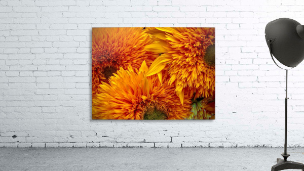 Fluffy Yellow Sunflowers