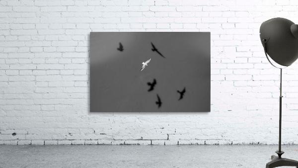 Bird and Shadows