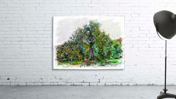 Cascading Olive Tree