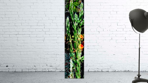 Neon Black Velvet Cactus 1