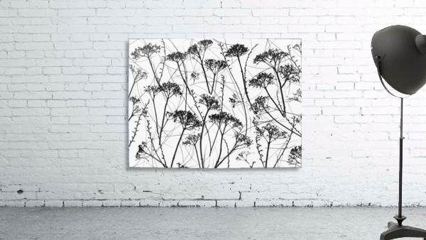 Silhouette of dried plants