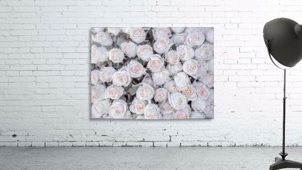 Full frame of Roses
