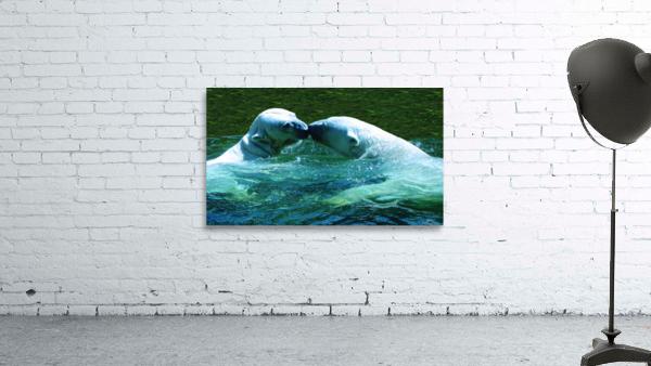 Kiss Me Polar Bears