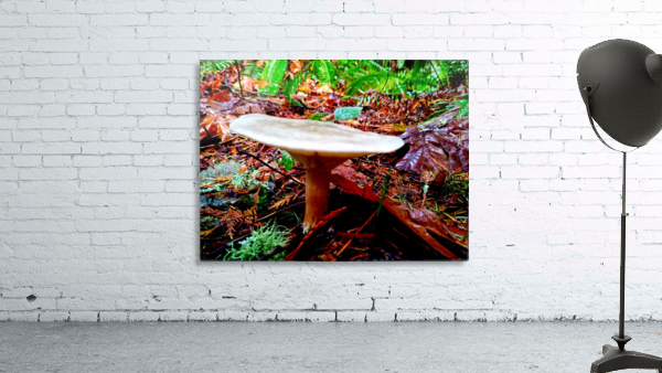 Tiny World 4 of 8 - Mushrooms and Fungi