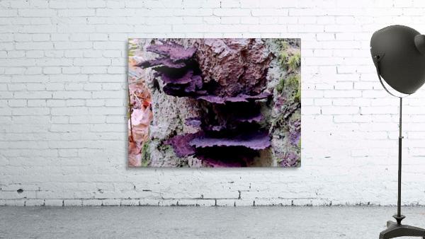 Tiny World 8 of 8 - Mushrooms and Fungi