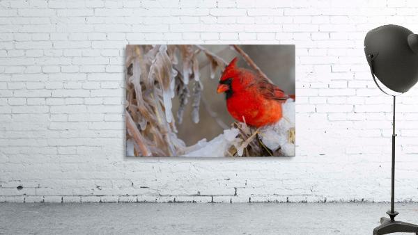 Cardinal ap 1869
