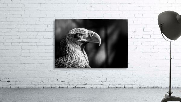 Eagle ap 2046 B&W
