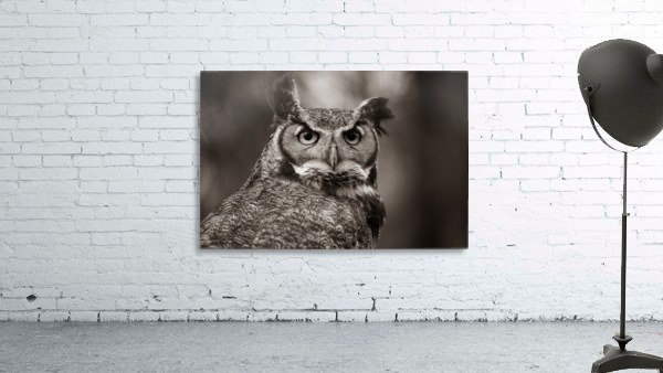 Great Horned Owl ap 2860 B&W