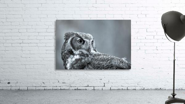 Great Horned Owl ap 2861 B&W