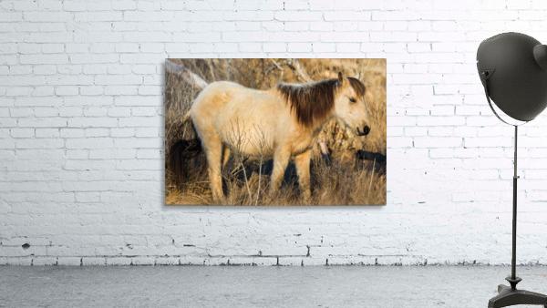Wild Horse ap 2740