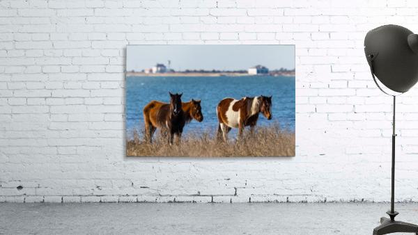 Wild Horses ap 2796