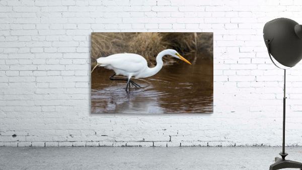 Great White Egret ap 2802