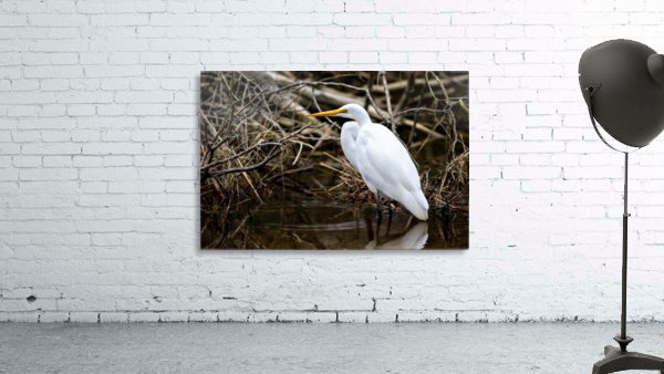 Great White Egret ap 2807